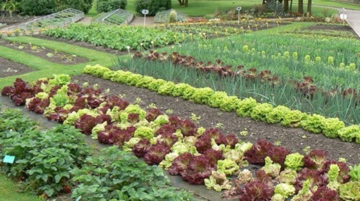 Беседа с детьми «что такое огород и что на нём растёт». воспитателям детских садов, школьным учителям и педагогам - маам.ру