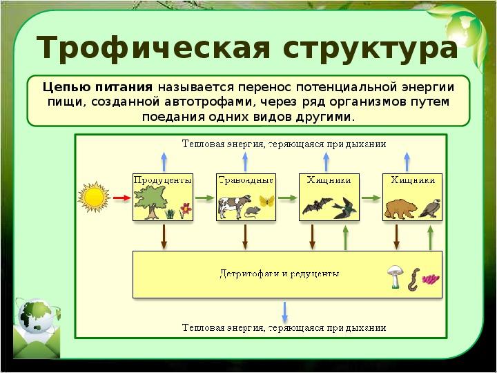Что такое биоценоз в биологии: его классификация и виды простыми словами