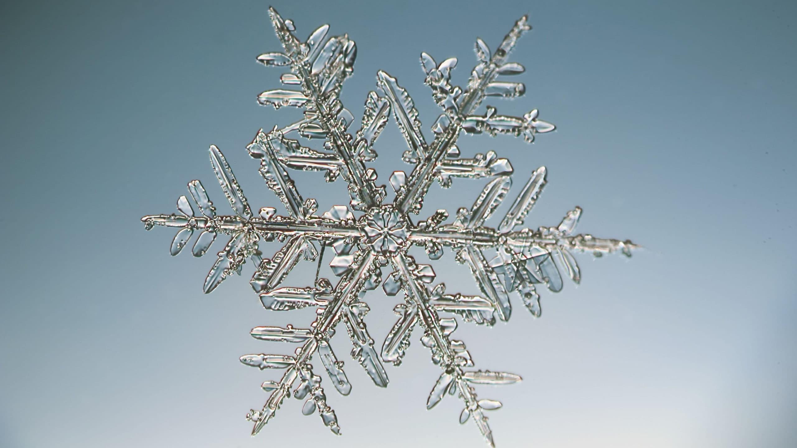 Снег: что это такое, как образуется, виды, как тает