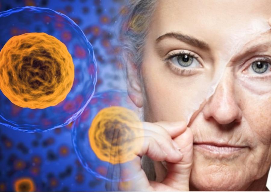Фабрика жизни: стволовые клетки