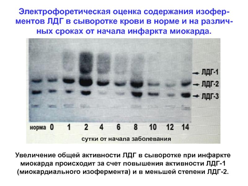 Лактатдегидрогеназа (лдг) – что это такое? свойства и показания