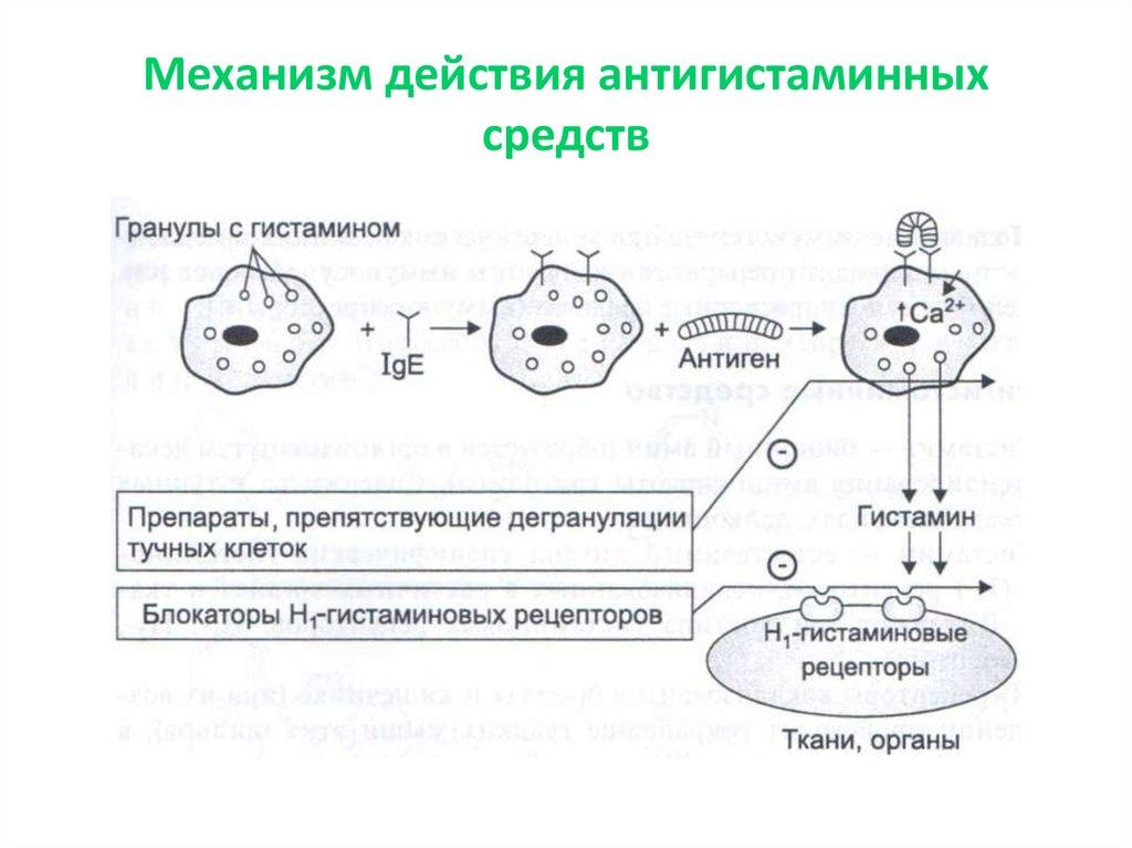Гистамин: что за элемент, зачем он нужен организму, и как нормализовать его уровень?