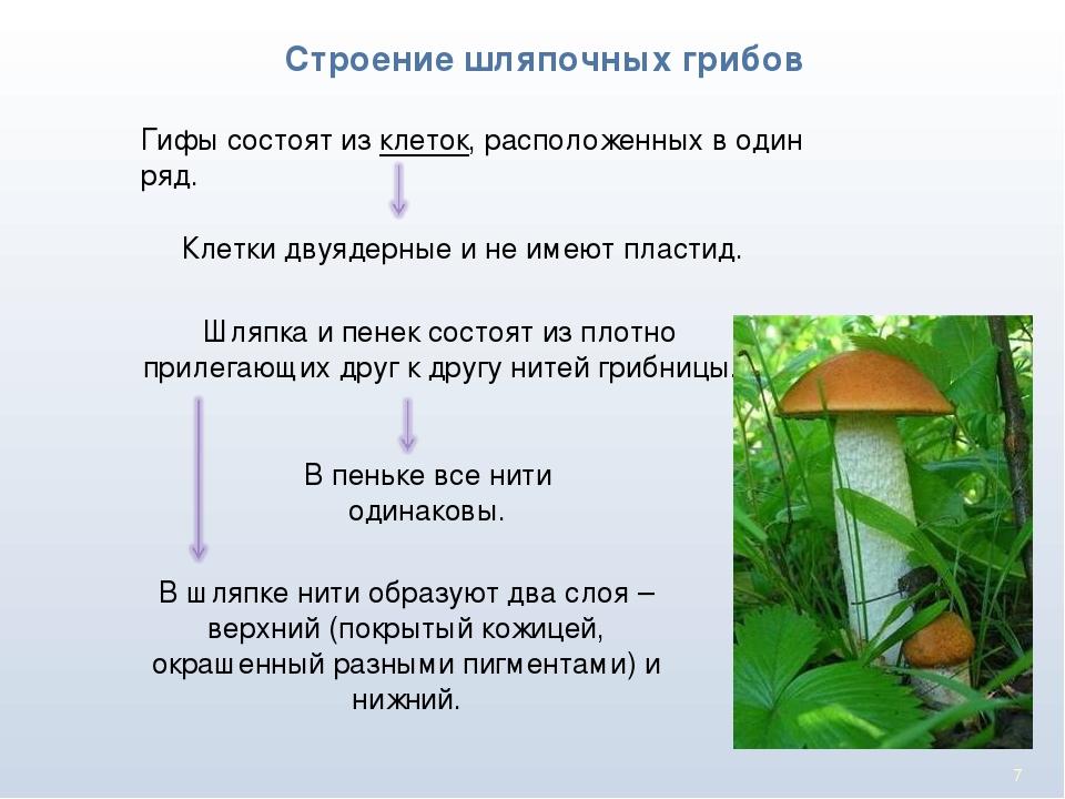 Что такое грибные гифы