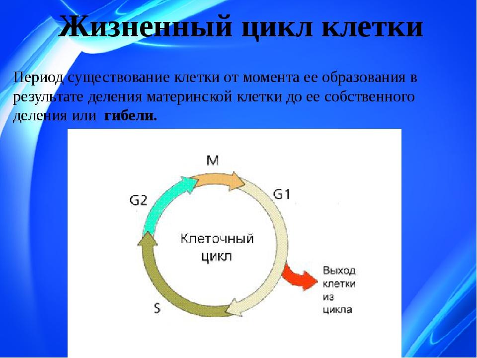 Закономерности существования клетки во времени. жизненный цикл клетки, его варианты. основное содержание и значение периодов жизненного цикла. ультраструктуры, обеспечивающие нормальный ход жизненного цикла — ответы на билеты по биологии | ifreestore
