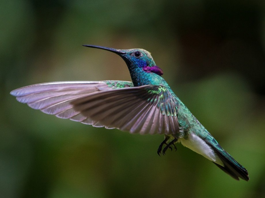 Колибри: все самое маленькое в одной птичке