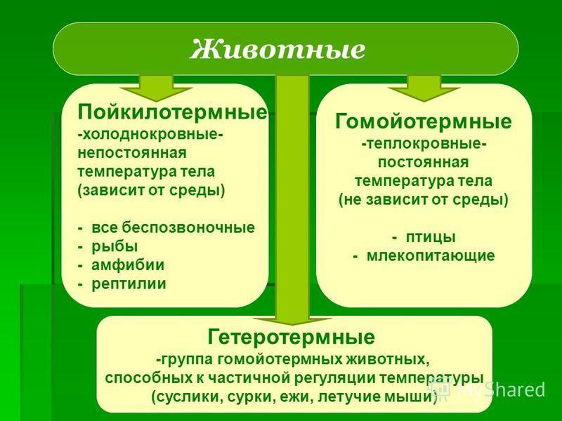 3.1.4. температурные адаптации гомойотермных организмов. общая экология