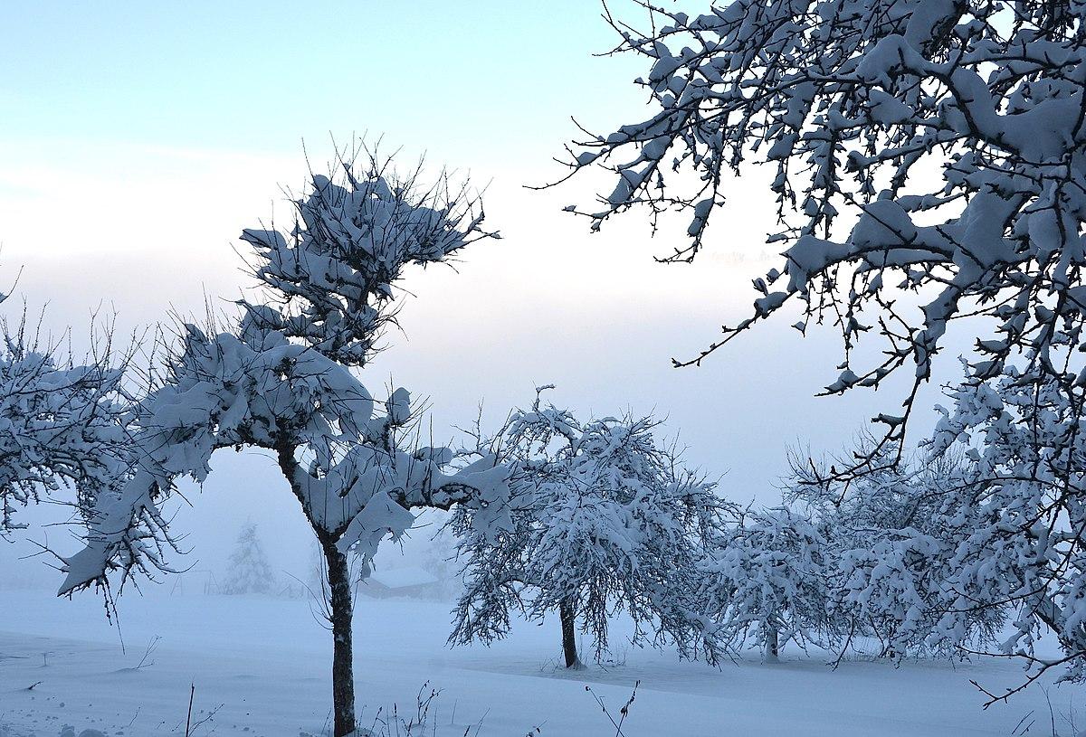 Что такое снег? каким бывает снег? : labuda.blog что такое снег? каким бывает снег? — «лабуда» информационно-развлекательный интернет журнал
