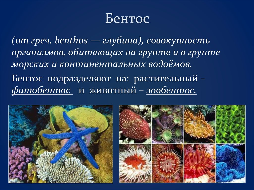 Характеристики нектона, питание и примеры нектонных организмов / биология   thpanorama - сделайте себя лучше уже сегодня!