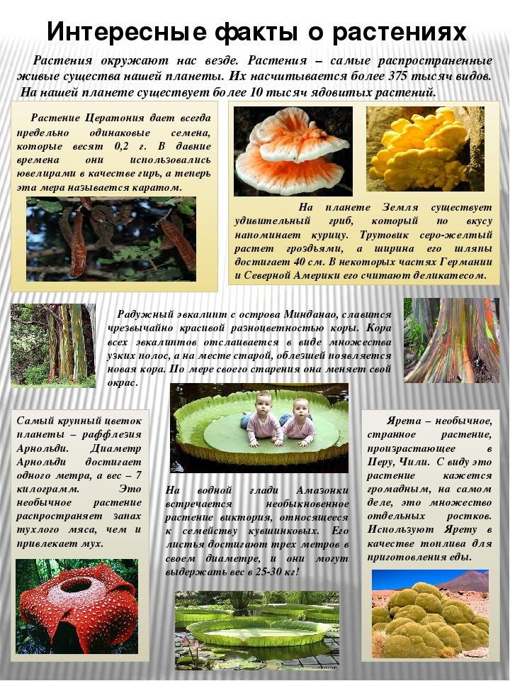 Что такое фотография?  - статья фотоискусства раздела теория фотографии. полезная информация по теме и интересные материалы :: fotoprizer.ru