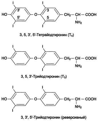 Основные причины повышения содержания тиреоглобулин в крови