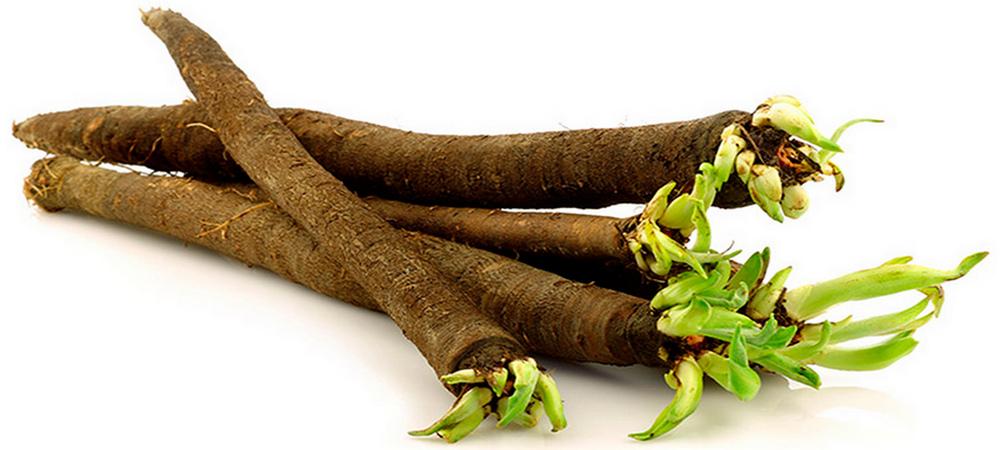 Скорцонера-черный корень (фото) посадка, уход и польза | сайт о саде, даче и комнатных растениях.