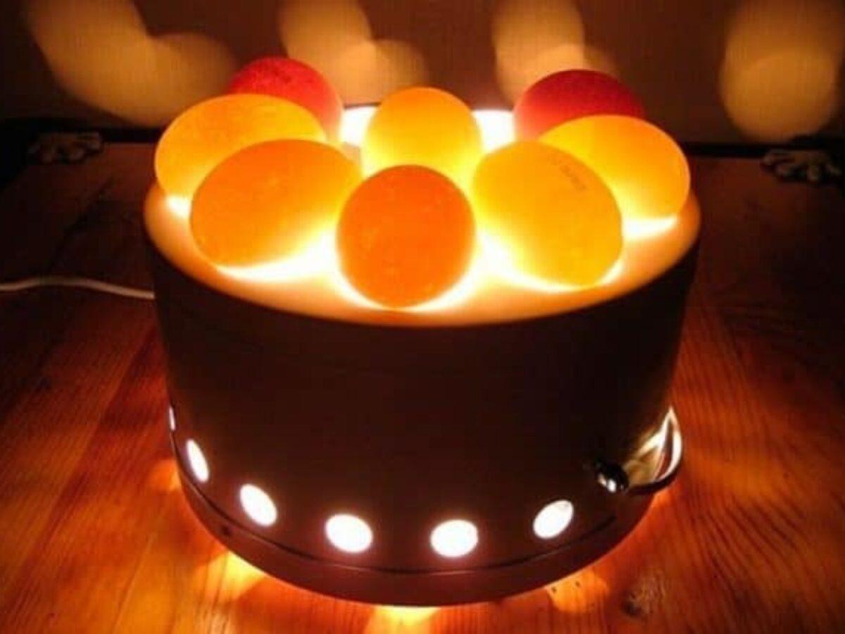 Овоскопирование куриных яиц: правила проведения процедуры