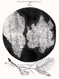 Получение клеточных культур. приготовление первичных клеточных культур.