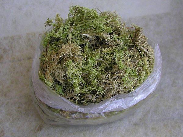 Болотный мох сфагнум: где растет этот мох, как используется такой мох при выращивании комнатных растений