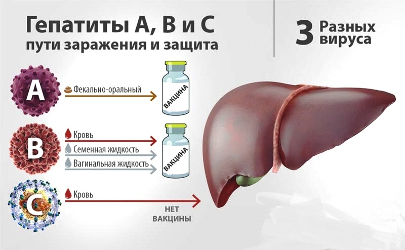 Как заражаются гепатитом с: самые частые способы