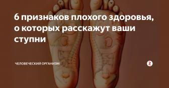 Из чего состоит нога – строение человеческой стопы
