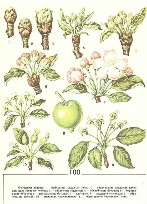 Вегетация растений: что это такое, сроки, подкормка, удобрения