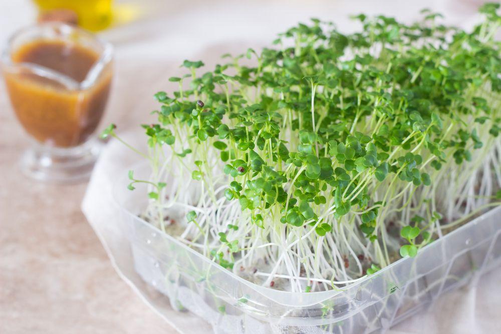 Микрозелень в домашних условиях. польза и выращивние — траварт