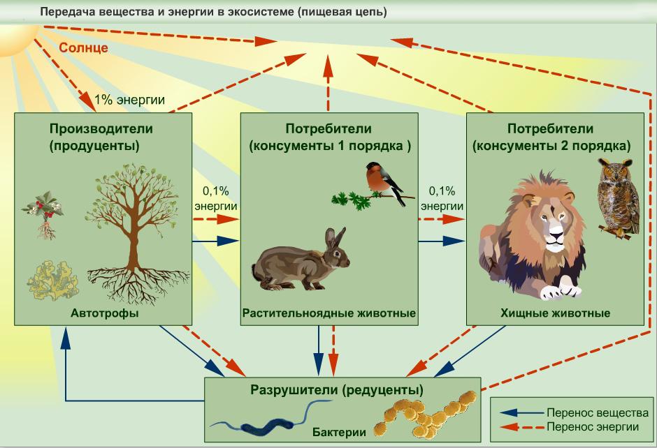 Круговорот биологический. роль живых организмов в биологическом круговороте