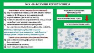 Что показывают ретикулоциты в анализе крови