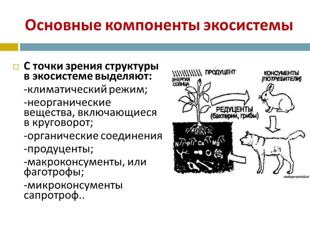 Что такое консументы 1 порядка? примеры консументов | новости для умных - news4smart.ru