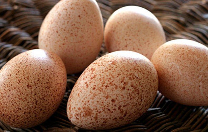 Овоскопирование куриных яиц во время инкубации, по дням