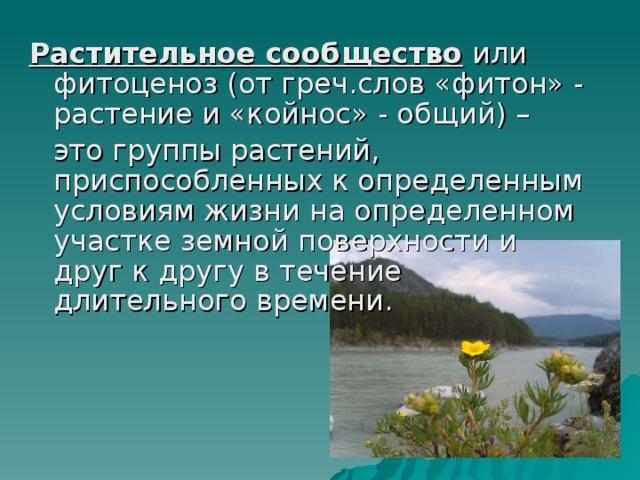 Фитоценоз — пермавики   permawiki.ru