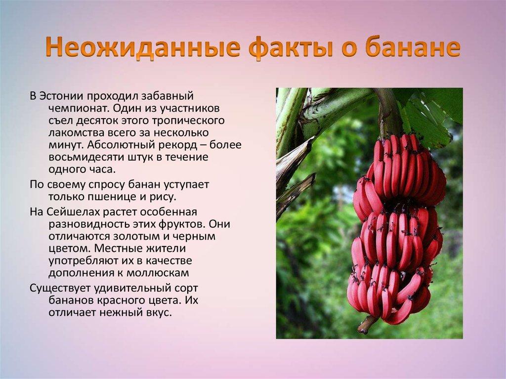 Банан (род)