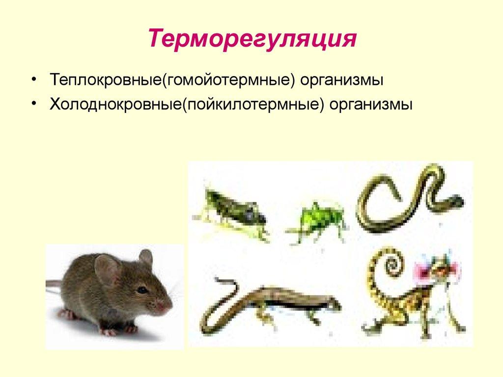 Биология. 10 класс