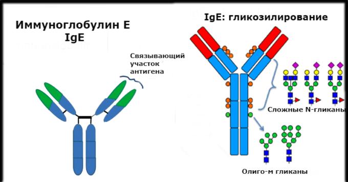 Иммуноглобулин человеческий – инструкция по применению, показания, дозы
