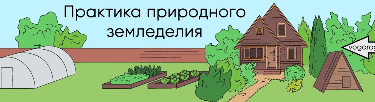 Выращивание картофеля от а до я часть1. что такое столоны? что такое репродукция картофеля? что такое миниклубни?