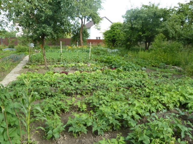 Огород — википедия. что такое огород