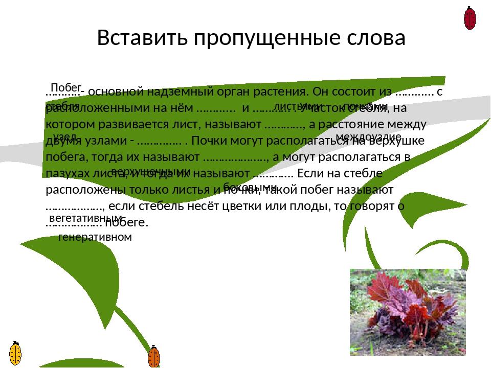 Побег (ботаника) — википедия. что такое побег (ботаника)