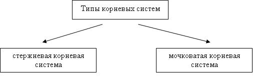 Зоны корня и их функции в таблице