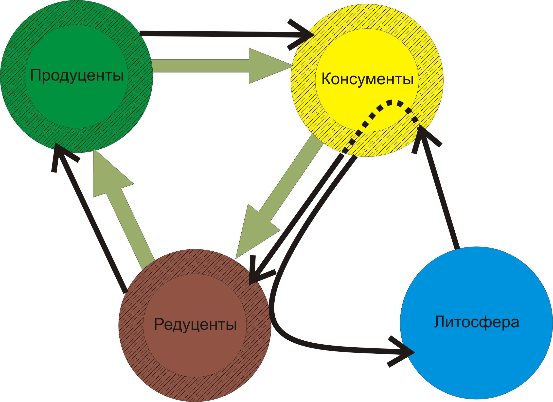 Трофические уровни: типы, значение, схемы и определение пищевой цепи
