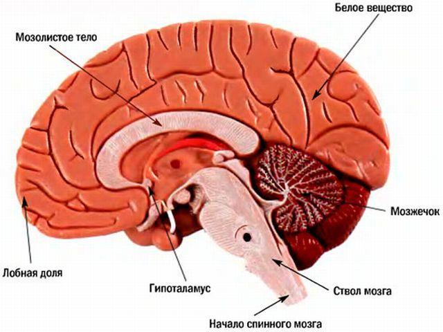 Стволовой инсульт: что это такое, симптомы, лечение, прогноз выздоровления, последствия
