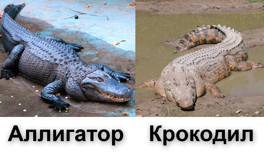 Наркотик крокодил