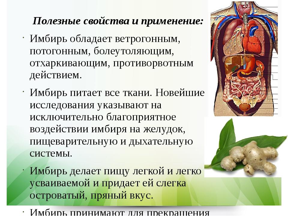 Имбирь полезные свойства: состав, действие корня, применение
