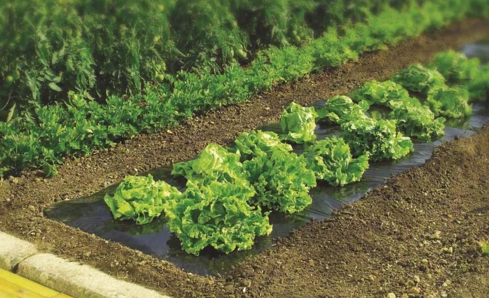 Как правильно мульчировать почву