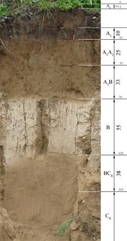 Почвенный горизонт: какие основные выделяют в профиле почвы и что это такое? какие почвы имеют горизонт вымывания? чем горизонты отличаются друг от друга?