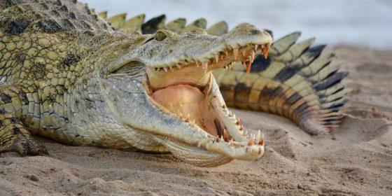"""Игра """"крокодил"""" — навык алисы, голосового помощника от яндекса"""