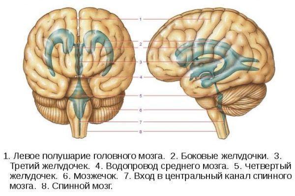 Геморрагический инсульт головного мозга - причины, лечение