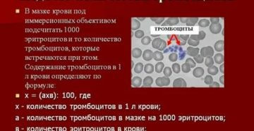 Все о тромбоцитах в анализе крови и подсчете фонио