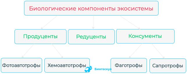 Редуценты — что это такое   ktonanovenkogo.ru