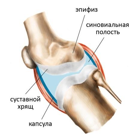 Что это такое синовиальная жидкость и как ее восстановить: внутрисуставное введение протезов, препараты и народные средства для сустава