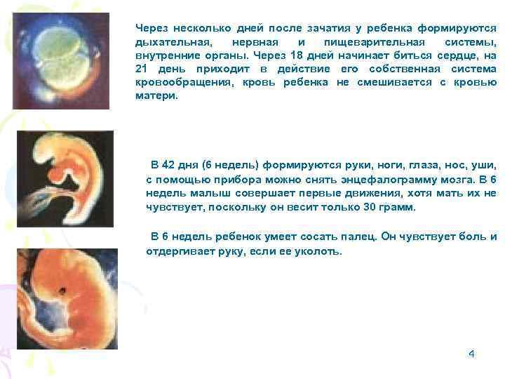Беременность — википедия с видео // wiki 2