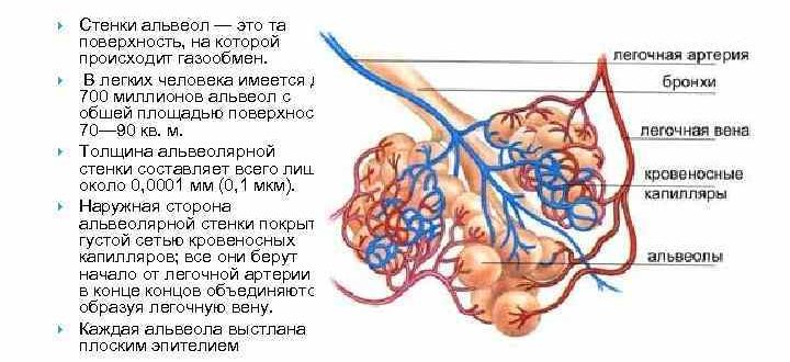 Что такое альвеолит, как его избежать, чем лечат альвеолит