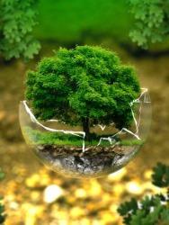 Экологические факторы — википедия. что такое экологические факторы