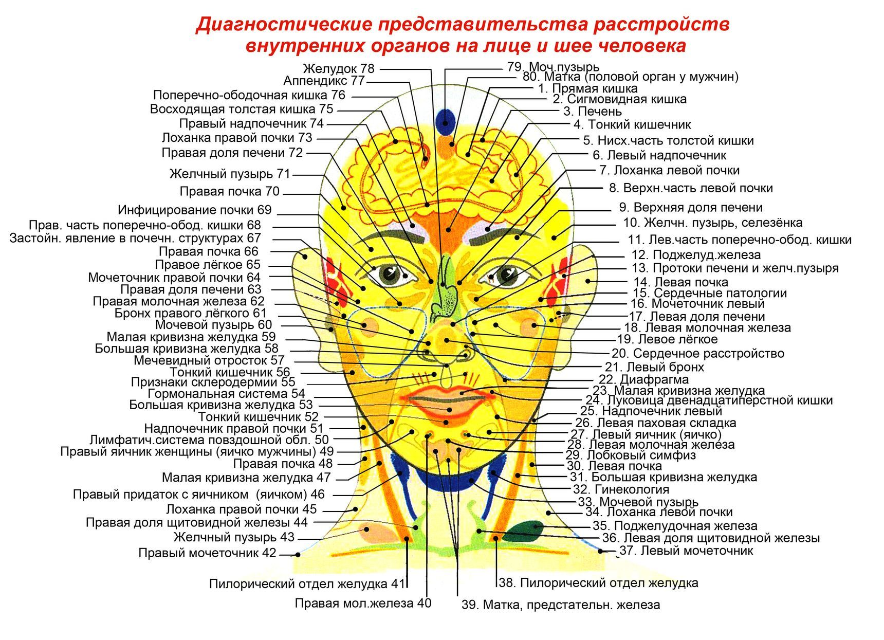 Карта прыщей на лице по зонам, причины расположения, симптомы внутренних заболеваний