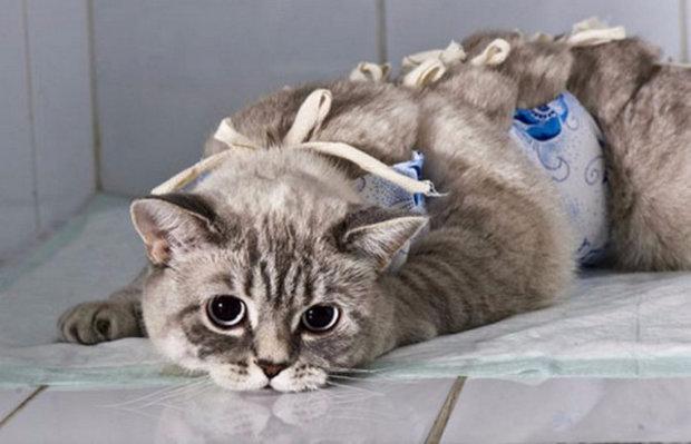 Стерилизация животных, кастрация животных, стерилизация домашних животных